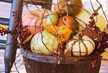 fall  / by Dawn Klinge