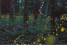 magicalness / by Sara Baldwin