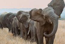 Elephants / by Jessica Vasapoli