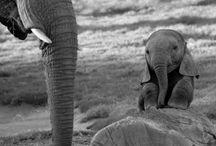 Elephants / by Mandy Johnson
