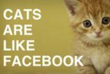 Internet Humor  / by TechCrunch