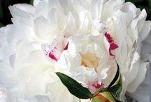 Flower / by Hiromi Sumida Sumida