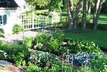 I Want a Veggie Garden / by DaisyMaeBelle