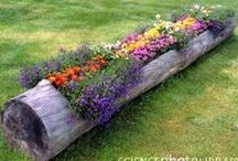 Gardening & Yard / Beautify your surroundings. / by Wendi Scharrer