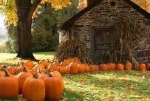 Fall into Autumn / by Tiffaney Ballard