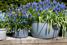 Small Baskets and Container Gardens / by Alice-Margaret Allan