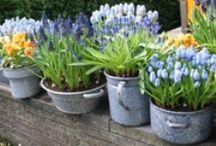Home & Garden. / Stuff for the home and garden.  / by ange zenren