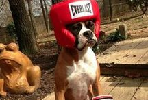 Boxer Love! / by Pacific University