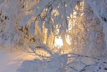 Winter wonderland / by Deborah Baksh