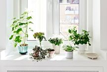 Plants / by Viivi