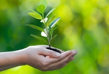 Environment / Some Useful Tips to Keep Our Environment Healthy / by Guiding Instincts