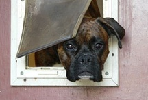 Furever Loyal  / Dogs, the good the bad and the ugly....   / by Doreen Orange Hostetter