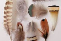feathers / by Kaycee Snowden