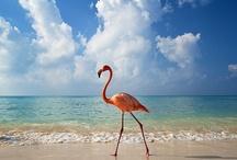 Flamingo / by Renee Hall