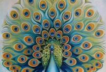 Peacock / by Renee Hall