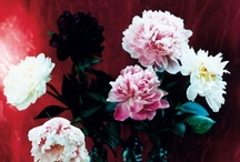 Flowers of Love  / by Bohemian Hippie