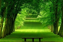 green / by Keico Shinoda