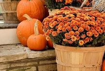 Autumn Fall Harvest / Autumn & Fall Recipes, decorating and fall things to do, see and make!!!  #autumn #fallrecipes #pumpkin #falldecorating #pumpkin / by Stacy