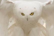 Owls / Who who who OWLS  / by Joni Fogle