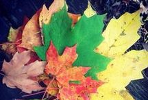CoMo Fall (2013) / Photos of the autumn season submitted by Missourian readers and staffers. / by Columbia Missourian
