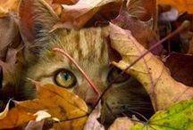 Cute Animals / by Gail Gundrum