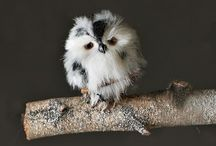 For the love of OWLS! / by Michelle Baumann