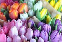 Stella & Dot | Fancy Florals / Floral arrangements that make our day  / by Stella & Dot