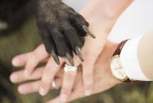 Future Wedding Ideas! / by Alexis Richardson