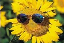 Pocket Full Of Sunshsine / Spreading smiles :) / by Aristavi World