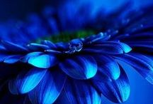 Blue / by Barb Dover