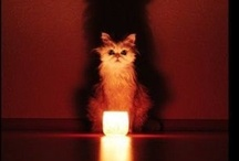 cat scratch fever / by Gerri Forester