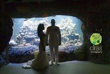 Ciras Photography Weddings / by Heather Ciras