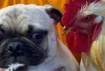 chicken coop & Chicken's / by Donna Coleman Buckman