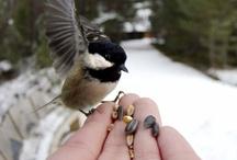 Bird Nerd / by Sherri