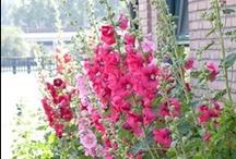 In The Garden / by Clara Phillips