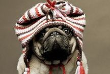 For the love of pugs! / by Angela Bloom