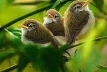 Bird Love / by Vic (Jane Austen's World)