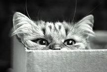 Chatons for ever  / by Marie-Eva Gatuingt