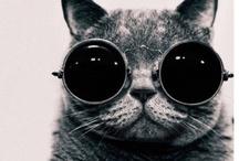 I Love Cats ♥ / by modaklik .com