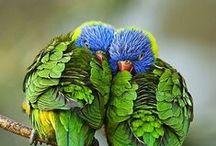 Bird Love / by Kay Hammock