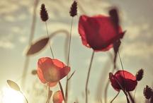Flowers / by Kelsey Nelson