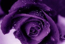 Everything Purple / I love anything purple... / by Glad Perez