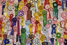 Dog Show Ribbons / Rosettes / by Jane Garvin