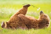 Bears / by Per Lantz