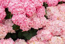 Flowers / by CM Bee