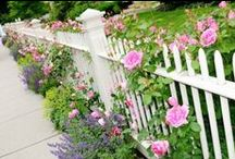 Gardening / by Dawn Phillips Williams