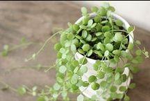 house : plants / by Alyssa