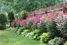 gardening / by Christie Manganis