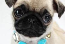 Awww Puppies / by Tresa Sargentelli
