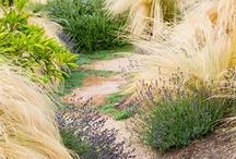 Garden Styles: Handsome Prairie / by Rochelle Walter Greayer